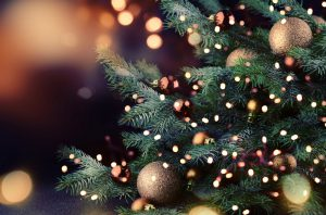 Saiba mais sobre a tradição dos pinheiros de Natal